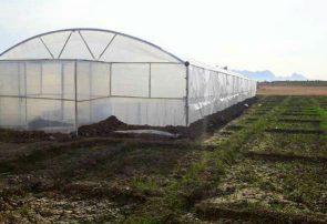 دو گلخانه برای تولید آلویهورا در فراه ساخته میشود