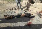 ملا اسماعیل فرمانده محلی طالبان در فراه کشته شد