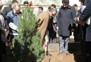 ماه سبز در هرات آغاز شد/بیش از ۲۷۰ هزار نهال غرس میشود