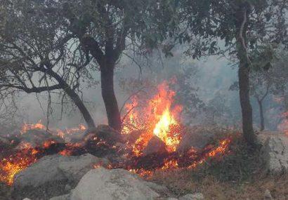 آتشسوزی خاک ترکمنستان در بادغیس مهار شد
