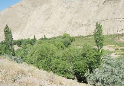 طالبان حمله دیشب را هم به خیزشهای مردمی تولک غور باخت
