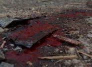 طالبان یک ملا امام مسجد را در هرات ترور کردند