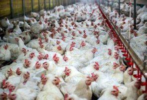 اتحادیه فارمهای مرغ گوشتی در هرات افتتاح شد