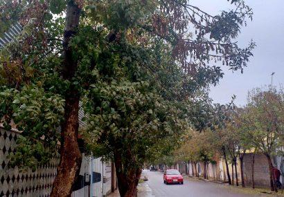 هوای زیبا و بارانی هرات