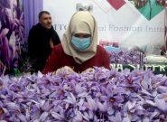 امسال هرات ۱۷ تن زعفران خالص تولید کرده است