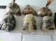 هفت قاچاقچی با ۱۶ کیلوگرام مواد مخدر در هرات دستگیر شدند