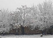 شمار جان باختگان سرمای هرات به شش تن رسید
