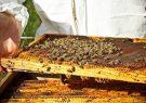 تولید عسل خالص در بادغیس امسال به ۹ تن رسید