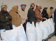 توزیع ۸۱۷ تن گندم بذری برای کشاورزان بادغیس آغاز شد