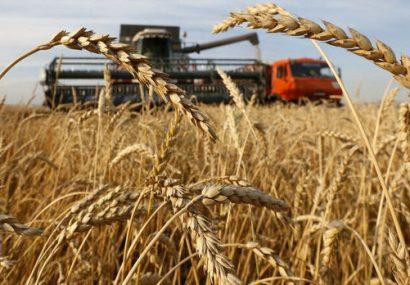 افغانستان از قزاقستان ۷۰ هزار تن گندم خریداری میکند