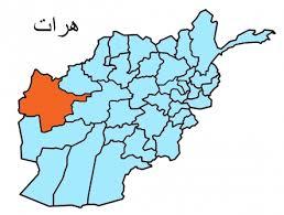 پولیس هرات هشت نفر را به ظن سرقت و قتل دستگیر کرد