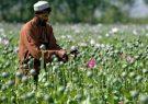 قاچاق مواد مخدر، سوداگری پردرآمد طالبان بادغیس