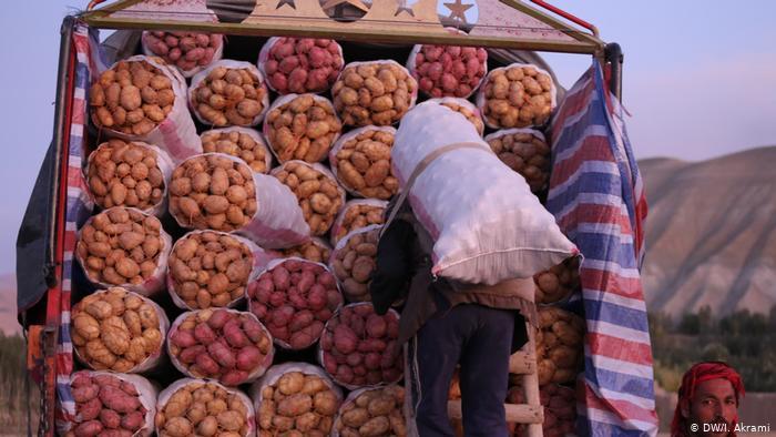 کشاورزان غور بر صفر درآمد کار میکنند