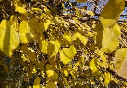 خزان فصل رنگهای آرام و دلنشین و آخرین روزهای پائیز هرات