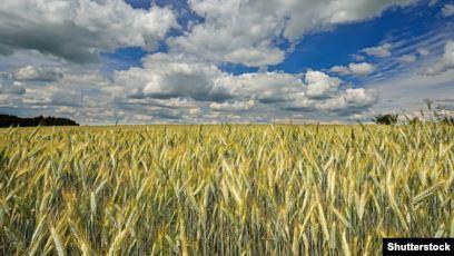رشد قابل قبول زراعت در فراه مردم را به خودکفایی رسانده است