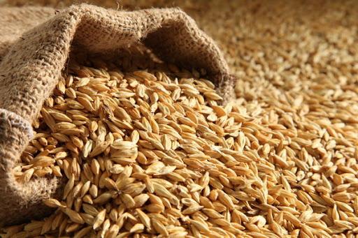 توزیع ۴۰ تن گندم به دهاقین ادرسکن/این ولسوالی کمتر مورد توجه ریاست زراعت است