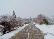 برف؛ لباس سفید را بر تن بادغیس پوشاند