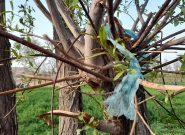 مردم هرات چه بلای بر سر طبیعت هرات آوردند