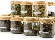 افزایش صادرات گیاهان طبی هرات به خارج از کشور