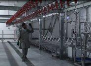 افتتاح کشتارگاه مواشی با هزینه شش میلیون دالر در هرات