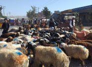 روز عرفه و بازار فروش مواشی برای قربانی در عید قربان