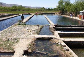 """پرورش ماهی """"قزلآلا"""" در اوبه هرات"""